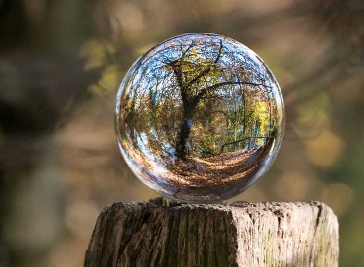 Bubble in Forest